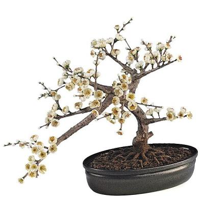 Bonsai artificial almendro en La Llimona home