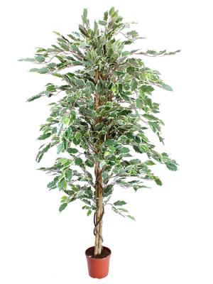 ficus artificiales economicos. Ficus artificial bicolor 160 Oasis Decor