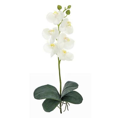 Orquideas artificiales driverlayer search engine for Orquideas artificiales